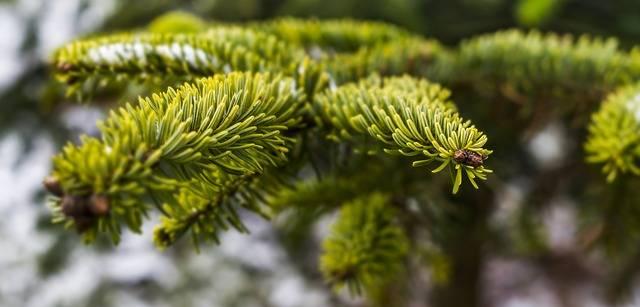 Weihnachtsbaumverkauf der Pfadfinder in Eilendorf